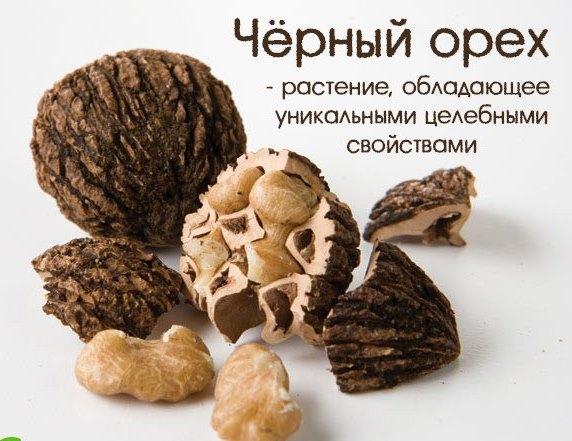 Черный орех- растение которое обладает уникальными целебными свойствами