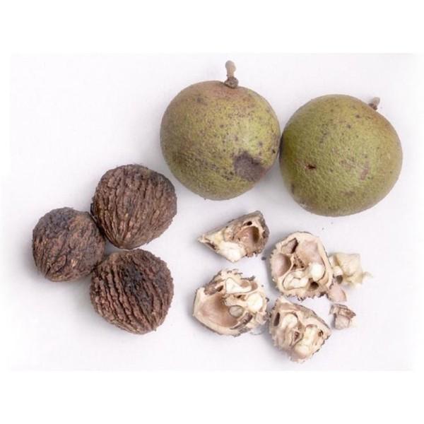 Черный орех лечебные плоды